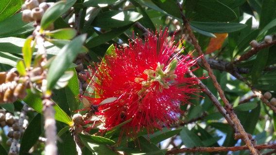 Schöne Pflanzen Für Den Blumenkübel Ndrde Ratgeber Garten