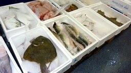 Fisch in Kisten auf dem Fischmarkt Hamburg  Fotograf: Petra Volquardsen