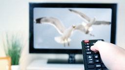 Ein Hand mit Fernbedienung ist auf einen Fernseher im Wohnzimmer gerichtet © fotolia.com Fotograf: Africa Studio, igorprusac