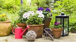Balkon und Terrasse mit Pflanzen gestalten | NDR.de - Ratgeber ...
