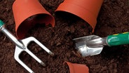 zimmerpflanzen richtig umtopfen ratgeber. Black Bedroom Furniture Sets. Home Design Ideas