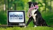 Logo der Aktion Wünsch dir deinen NDR in einem Fensehmonitor, daneben steht ein Hund mit einer Leine im Maul (Montage) © NDR, Nicolas Maack, istockphoto, Fotolia.com Foto: George Peters, René Mansi, DragoNika