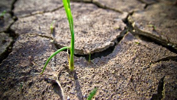 So Wirkt Sich Klimawandel Aufs Grundwasser Aus Ndr De