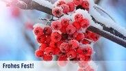 Winterliche rote Beeren an einem verschneiten Strauch. © fotolia.com Fotograf: Mikael Damkier