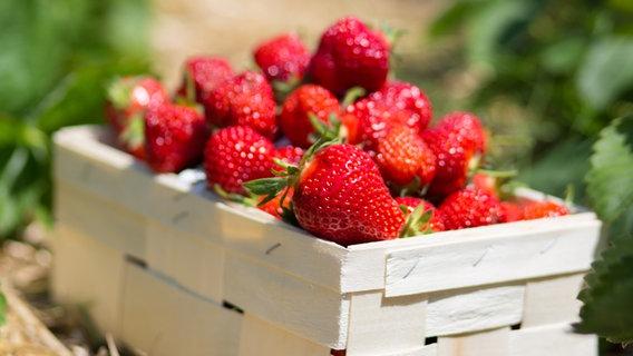 wie lagert man erdbeeren