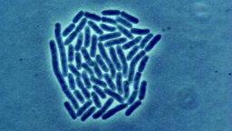 Bakterien.