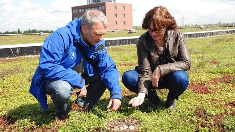 Hanna Bornholdt und Ornithologe Sven Baumung begutachten den Bestand einer Möwenkolonie, die auf dem Gründach einer Spedition in Moorfleet brütet. © NDR/CineCentrum/Heike Schieder
