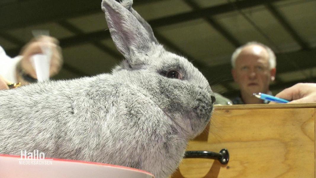 Kaninchenzüchter Hamburg