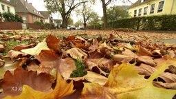Herbstlaub bedeckt eine Straße.