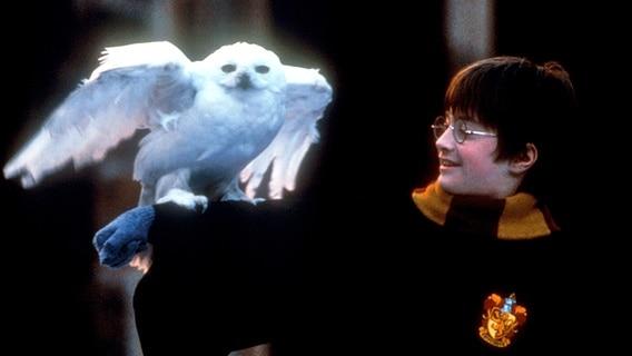 Harry Potter (Daniel Radcliffe) und seine Eule Hedwig in der Verfilmung des ersten Romans: HARRY POTTER UND DER STEIN DES WEISEN (Original: Harry Potter and the Sorcerer's Stone) © picture-alliance / KPA Honorar &