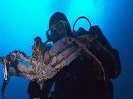 Unentdeckte Spezies in der Tiefe