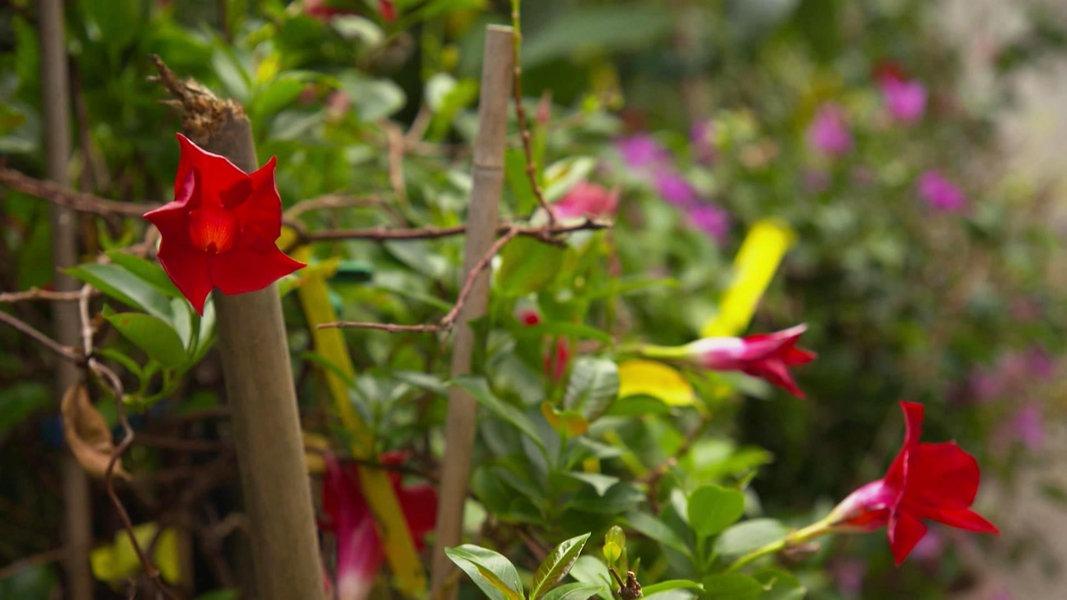pflanzenpension topfpflanzen berwintern fernsehen sendungen a z rund um den michel. Black Bedroom Furniture Sets. Home Design Ideas