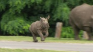 Ein kleines Nashorn rennt durch den Serengeti-Park in Hodenhagen.