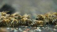 Viele Bienen beisammen.