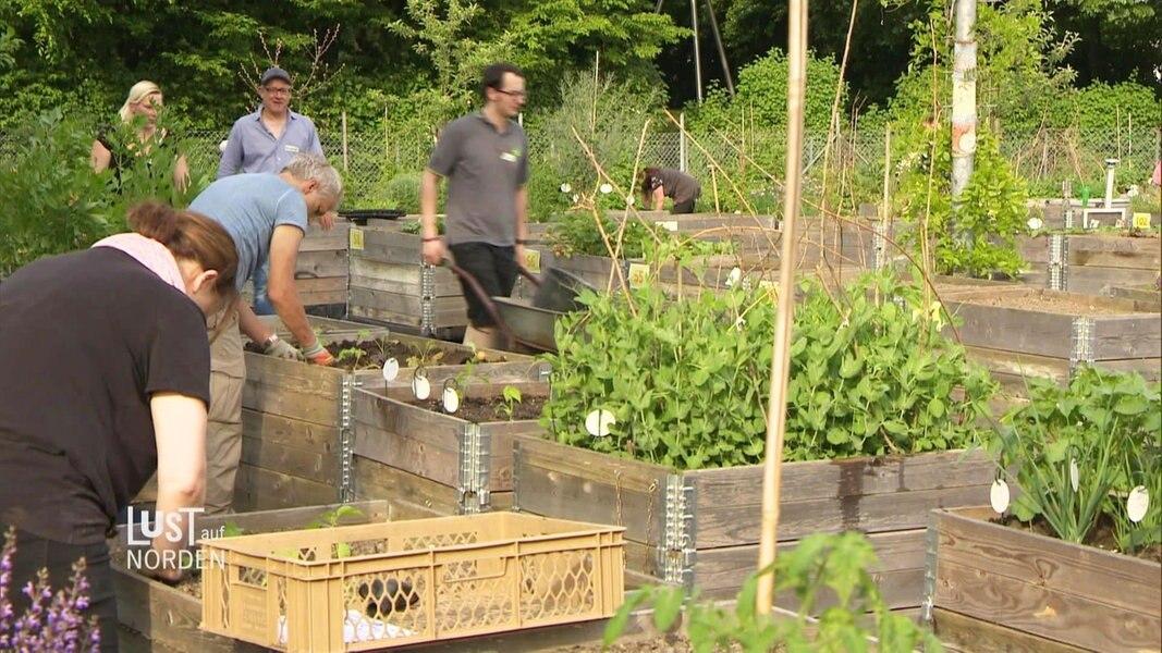 gr ne oasen urban gardening fernsehen sendungen a z lust auf norden. Black Bedroom Furniture Sets. Home Design Ideas