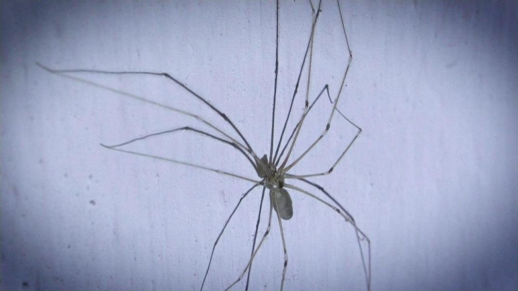 Giftige Spinnen Was Hilft Gegen Bisse Ndrde Ratgeber Gesundheit