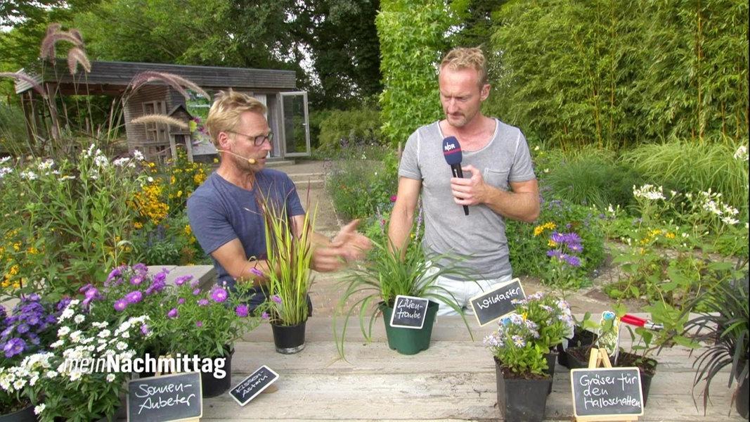 Ziergräser Pflanzen Pflegen Und Vermehren Ndrde Ratgeber