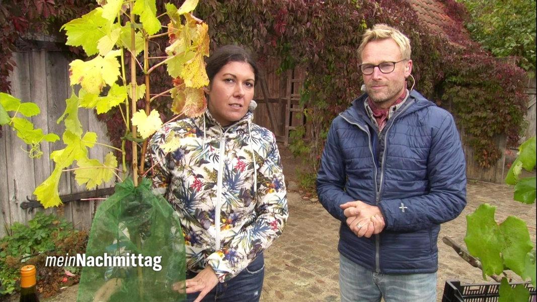 Weinreben pflanzen und pflegen fernsehen for Weintrauben im garten anbauen