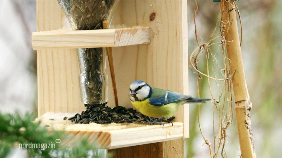 Futterstation Fur Heimische Vogel Bauen Ndr De Ratgeber Garten
