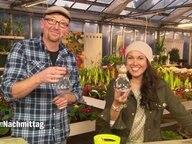 hyazinthen im glas vorziehen ratgeber garten zierpflanzen. Black Bedroom Furniture Sets. Home Design Ideas