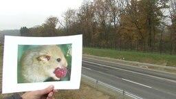 Ein ausgedrucktes Bild einer Maus vor Schnellstraße
