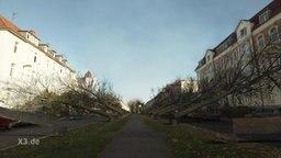 Gefällt Bäume an einer Straße
