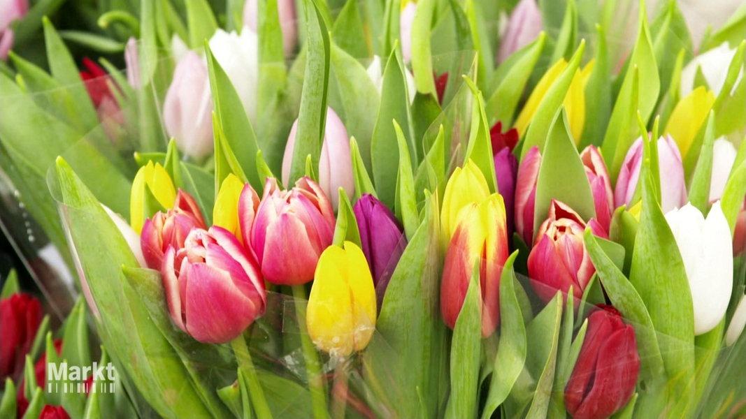 Tulpen Pflegen Als Schnittblume Und Im Beet Ndrde Ratgeber