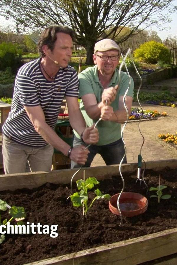 Gurken und Zucchini ins Hochbeet setzen