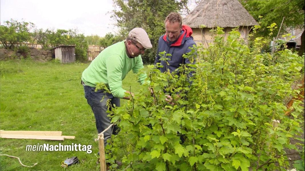 Atemberaubend Beerensträucher pflanzen, pflegen und schneiden   NDR.de @UT_57