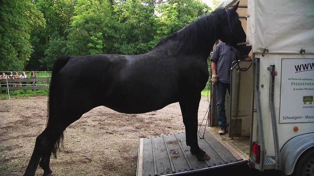 Der Pferdeversteher - Sag niemals nie