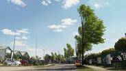 Strasse von halben Bäumen gesäumt