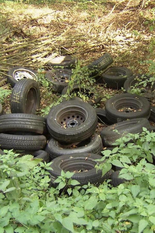 Immer mehr Müll wird illegal im Wald entsorgt