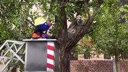 Grobi der Feuerwehrmann fährt mit einer Hebebühne zu einem Baum hoch, um eine Katze zu retten.