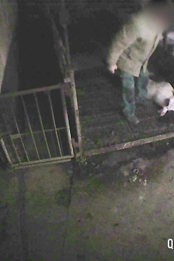 Tierquälerei in Schweinemastbetrieb in Vielank