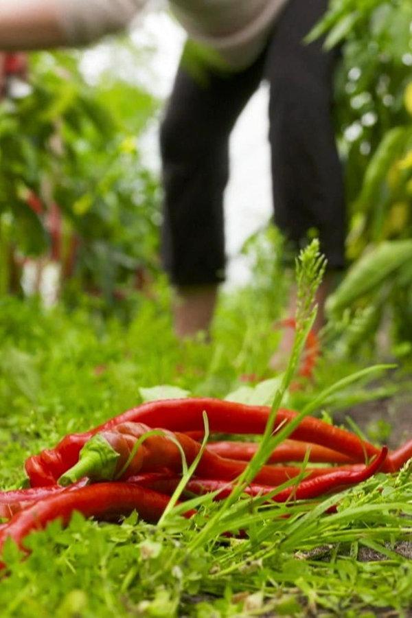 Solidarische Landwirtschaft: Das Gemüse-Abo