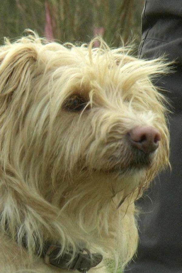 Geburtstag: Sechs Findelhunde feiern Wiedersehen
