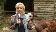 Britta von Lucke berichtet zwischen Alpacas.