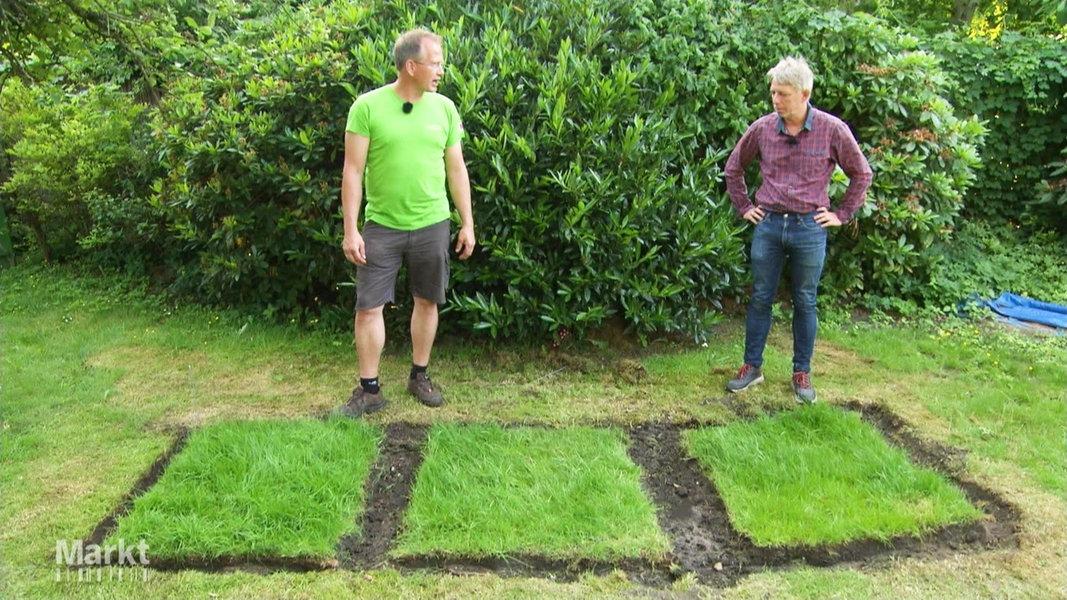 Was Hilft Gegen Moos Im Rasen
