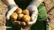 Ein Bauer hält zwei Hände voll Kartoffeln in die Kamera.