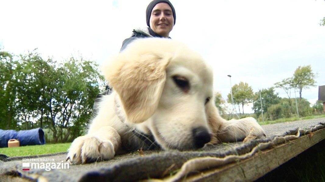 Training für unerfahrene Hundehalter und ihre Welpen