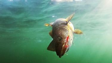 grausame fang arten von fischern