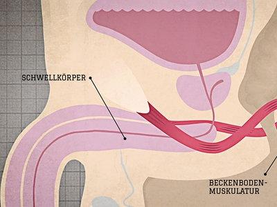 Durchblutung im penis fördern