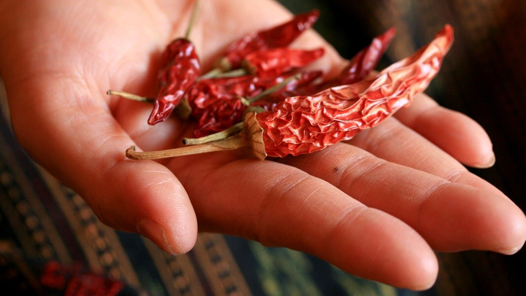 chili pflanzen richtig berwintern ratgeber garten nutzpflanzen. Black Bedroom Furniture Sets. Home Design Ideas