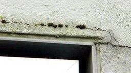 Risse in einer wärmesanierten Fassade, darin Moos und Algen. © NDR