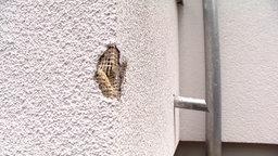 Kante eines Balkons mit weißem Putz, die an einer Stelle stark beschädigt ist. © NDR