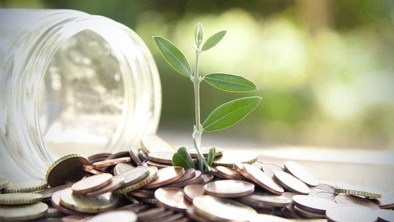 Bingo Die Umweltlotterie Gewinnzahlen
