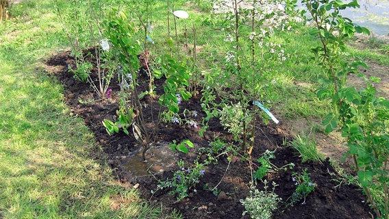 hecke pflanzen abstand thuja pflanze lebensbaum hecke thuja smaragd 1a pflanzen thuja hecke. Black Bedroom Furniture Sets. Home Design Ideas