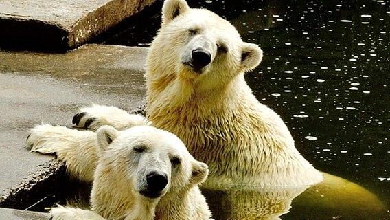 Eintritt Zoo Rostock : eisb ren und mehr im zoo rostock ratgeber reise tierparks ~ Pilothousefishingboats.com Haus und Dekorationen