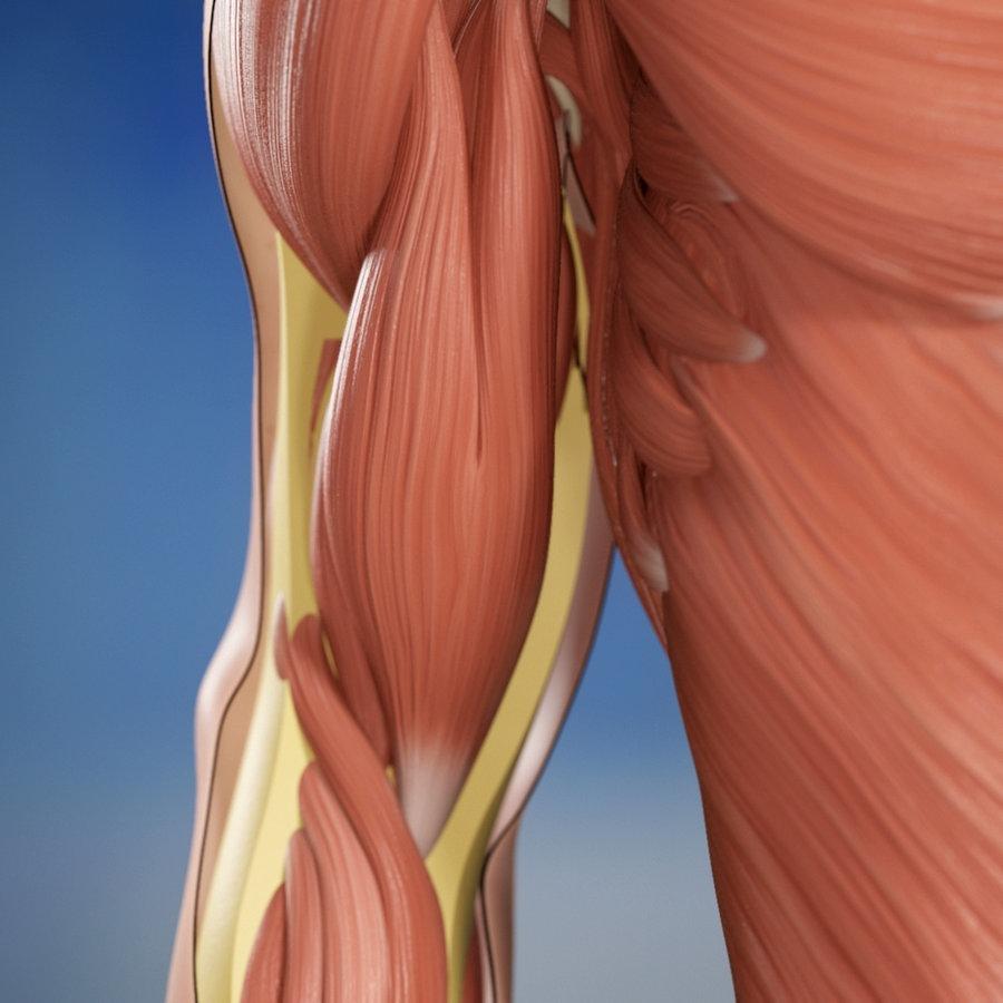 Oberarm muskel am knubbel Muskelverhärtung im