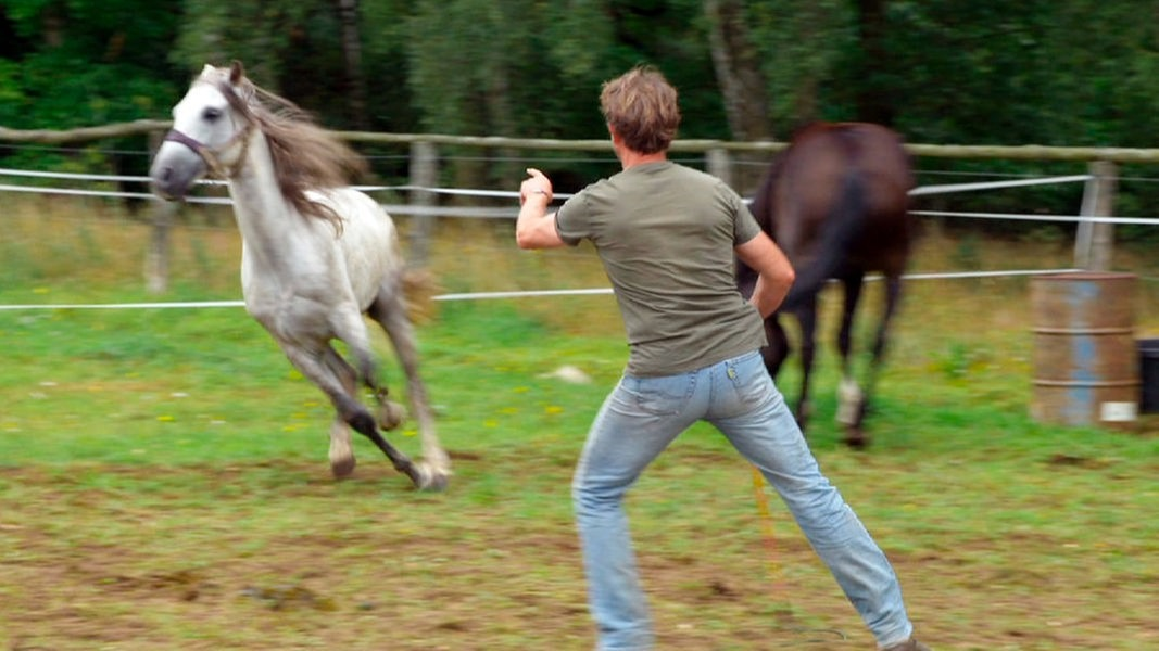 Pferde Sendungen
